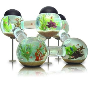 aquarium-labyrinthe-poisson