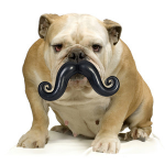balle-moustaches-chien
