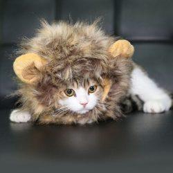 Crinière lion pour chat et chien