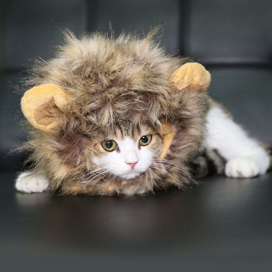 criniere-lion-chat-2