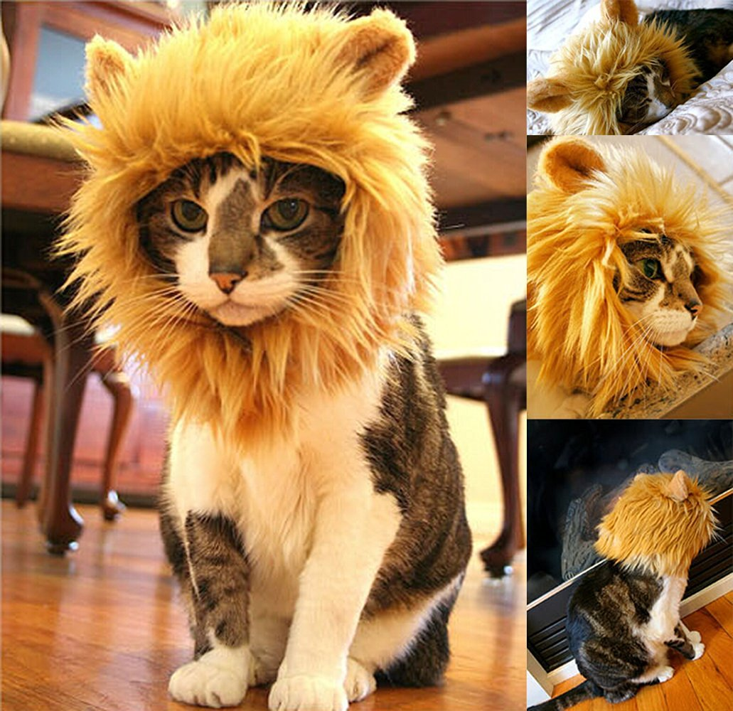 criniere-lion-chat