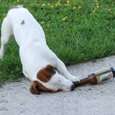 biere-pour-chien