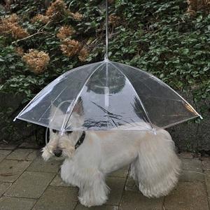 Parapluie laisse pour chien votre toutou se prom nera au - Laisse pour chien pas cher ...