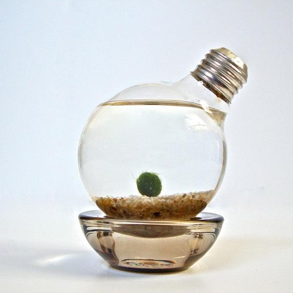 aquarium-marimo-ampoule
