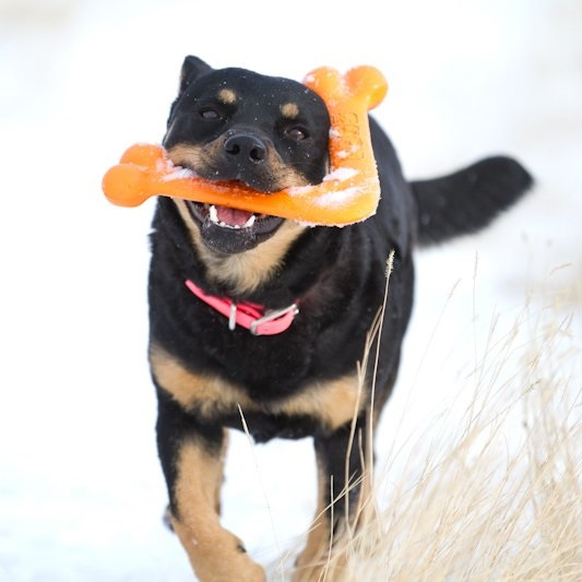 boomerang-pour-chien-wooferang