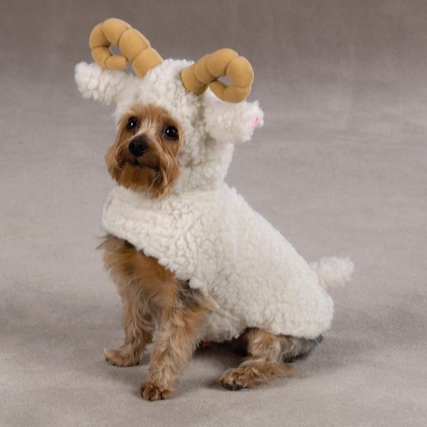 costume-chien-mouton