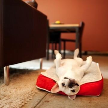 lit-pour-chien