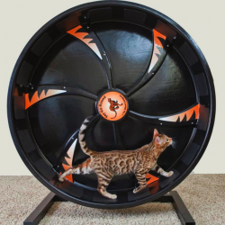 Roue d'exercice pour chat