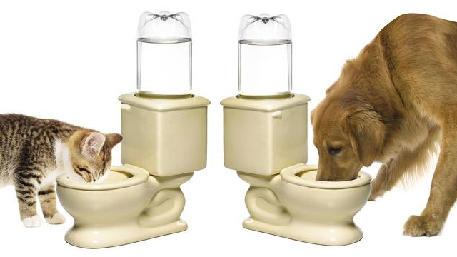 gamelle toilette pour chien ou chat il boira dans la cuvette des wc. Black Bedroom Furniture Sets. Home Design Ideas