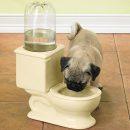 gamelle-chien-chat-toilette-wc-eau