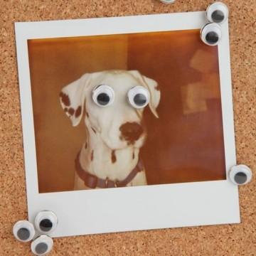 punaise-yeux-lot-cartoon
