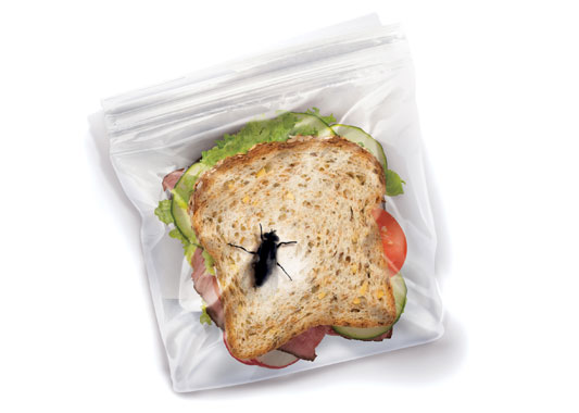 sachet-sandwich-insecte-fred-and-friends