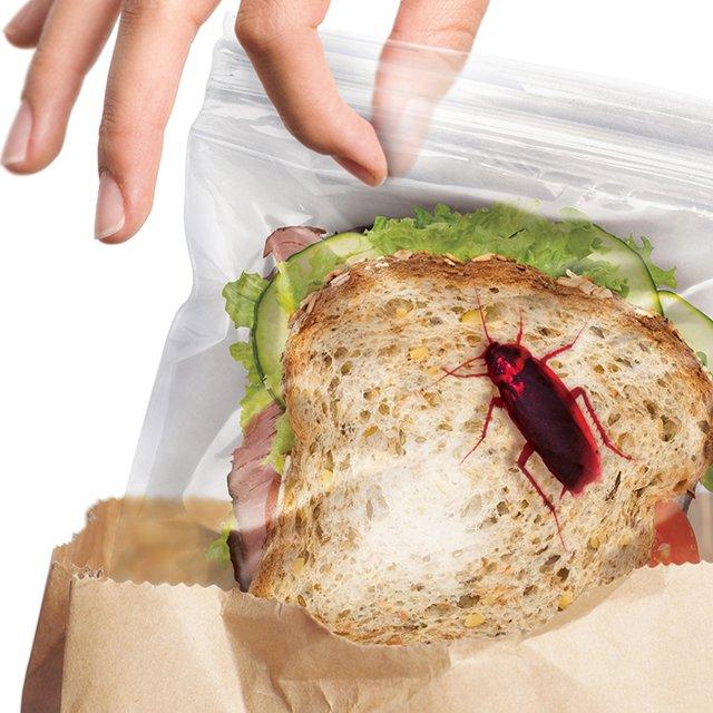 sachet-sandwich-insecte-sac-plastique