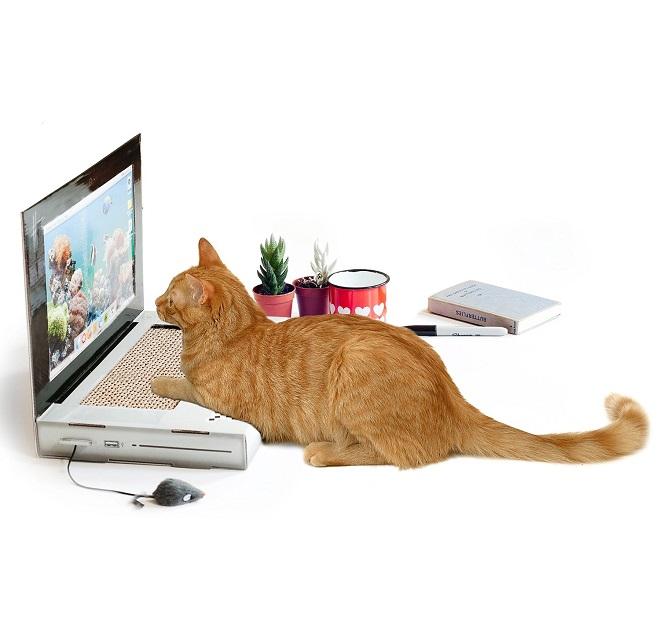 griffoir chat autocollant
