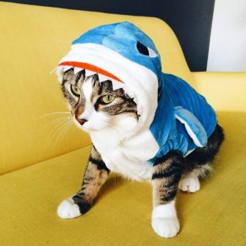 costume-chat-requin-deguisement