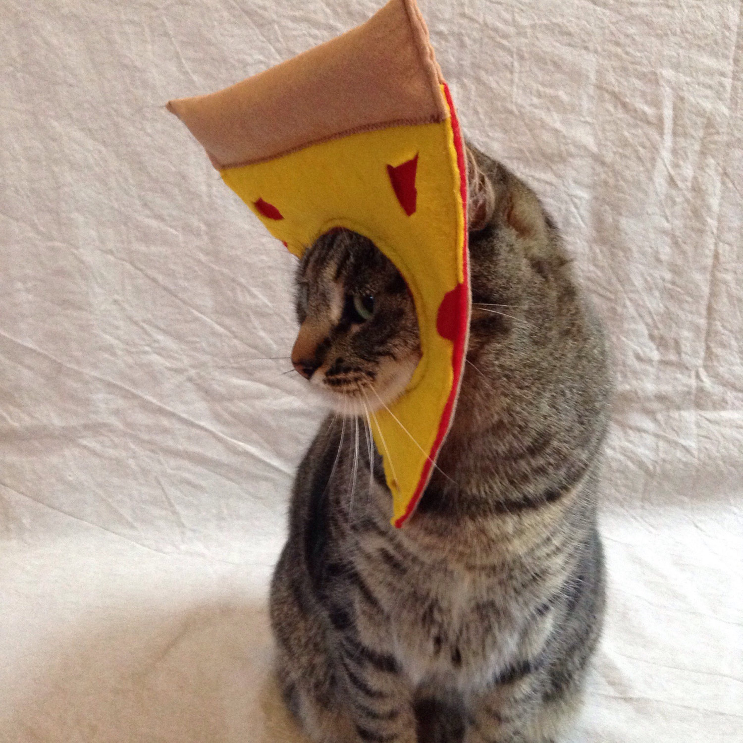 costume-pizza-chat-deguisement-1