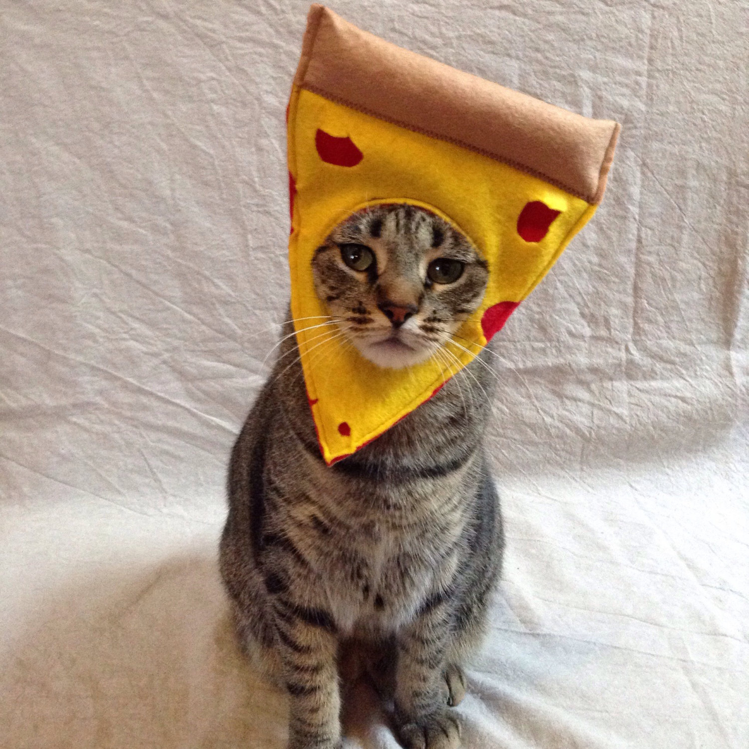 costume-pizza-chat-deguisement