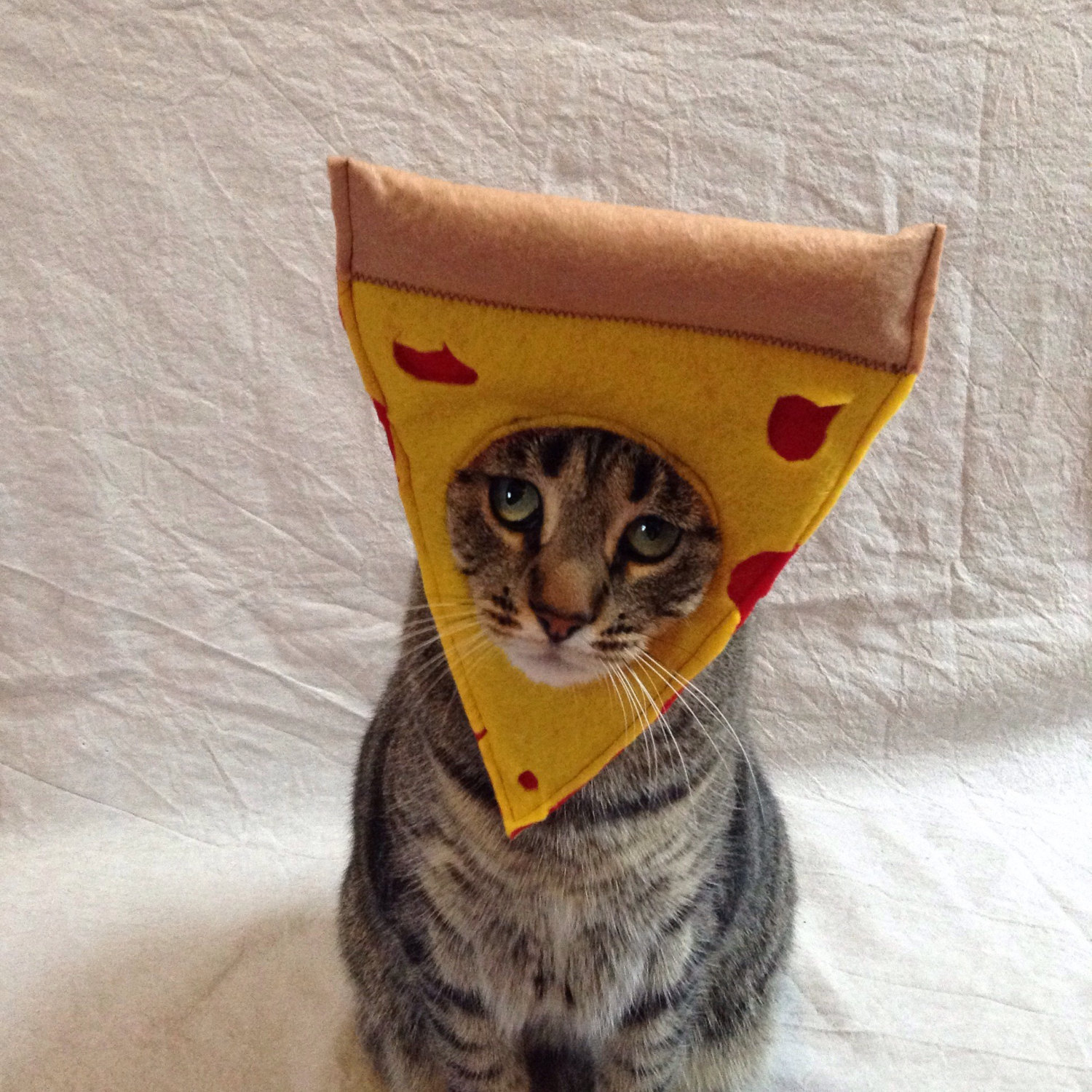 costume-pizza-chat