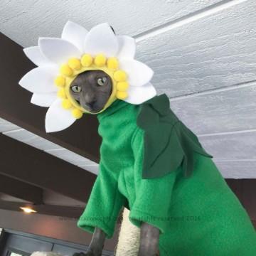 deguisement-marguerite-chat-costume