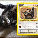 carte-pokemon-personnalisee-animal-de-compagnie-chat-chien