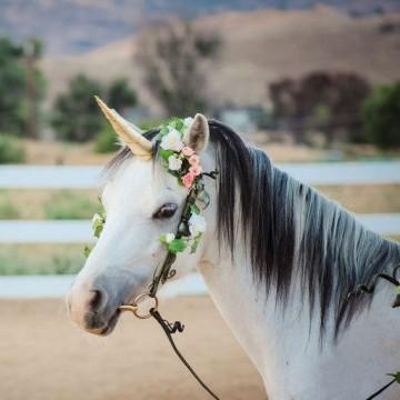 corne-de-licorne-pour-cheval