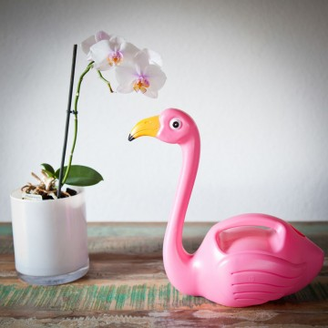 arrosoir-flamant-rose