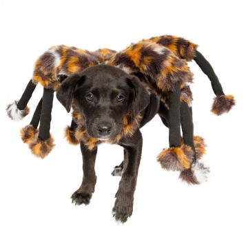 costume-ariagnee-pour-chien-chat